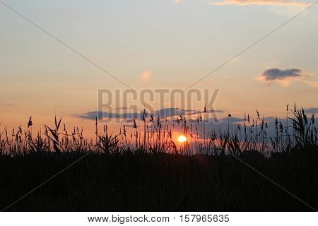 Sunset over the reeds on the lake
