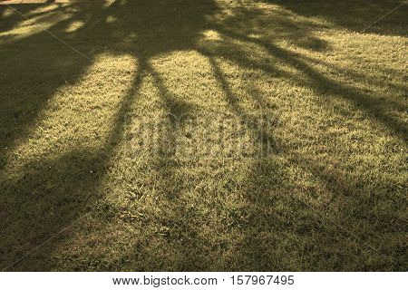 Tree shadow on short green grass in spring. Toned Image
