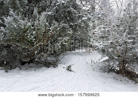 Winter in the park with fir trees covered by deep snow