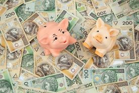 two piggy on polish money as background