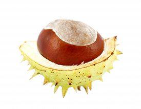 open chestnut in peel on white background