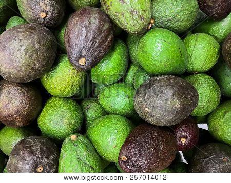Heap of Hass avocado (Bilse avocado). Dark green and green colored, bumpy skin avocado cultivar. Persea americana. poster