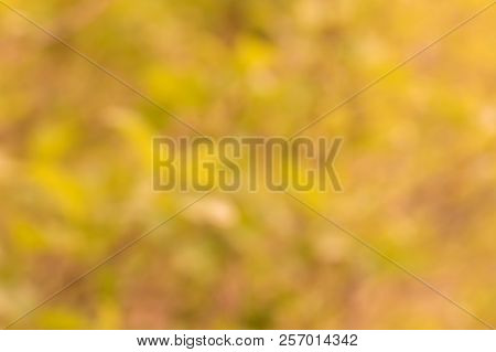 Natural Golden Bokeh Background. Defocuset Backdrop With Green Plants.