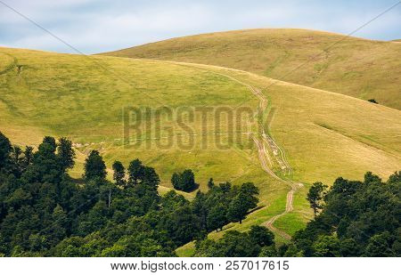 Beech Forest On Rolling Hills Of Mountain Ridge. Beautiful Scenery With Alpine Meadows. Wonderful Na