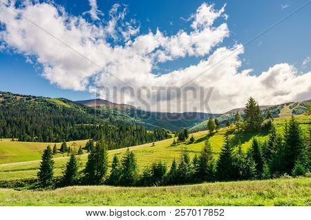 Early Autumn Countryside In Mountains. Lovely Landscape With Spruce Forest On The Grassy Hill. Beaut