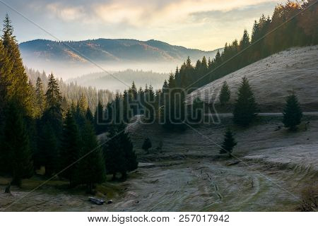 Beautiful Autumn Scenery In Mountains At Sunrise. Spruce Forest On The Hill. Fog Rise In The Distant