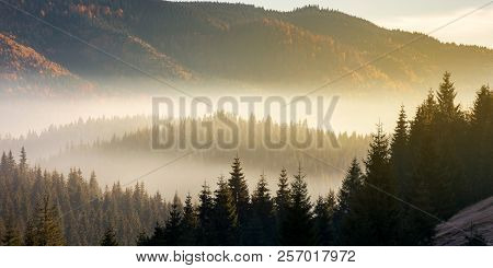 Beautiful Foggy Scenery In Autumn At Sunrise. Fog Rise Above The Distant Valley And Spruce Forest On