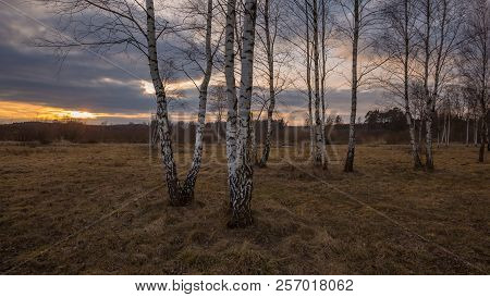 Early Spring Forest Landscape. European Forest After Winter At Sunny Day