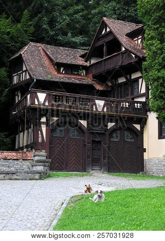 Two dogs on the lawn in ront of wood frame house in Peles, Romania poster