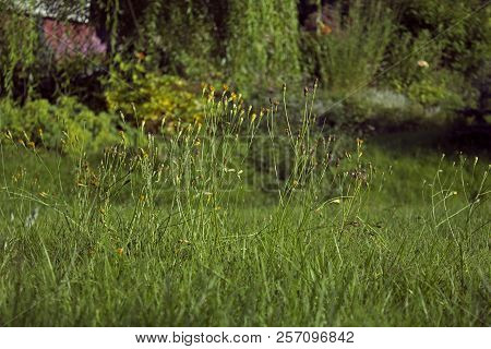 Big Uncultivated Meadow With Different Types Of Grass