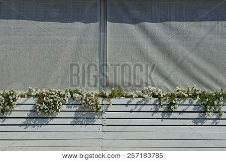 Gray Wall Of Cloth And Wooden Boxes Of Flowerpots With Decorative White Flowers