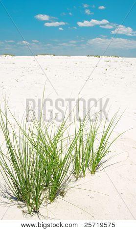 Green sea grass on sand dune under pretty sky