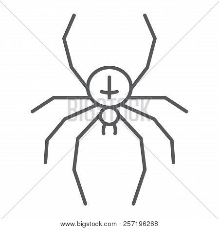 Spider Thin Line Icon, Animal And Arachnid, Halloween Sign, Vector Graphics, A Linear Pattern On A W