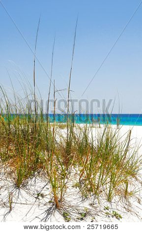 Tall sea grass on sand dune of pretty tropical beach