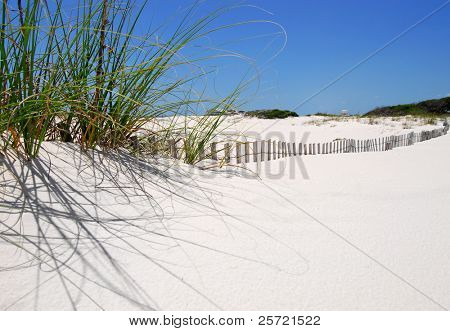 Sawgrass on sand dune with fence