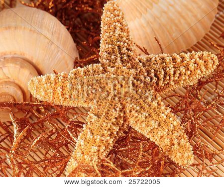 Starfish and shells on golden seaweed poster