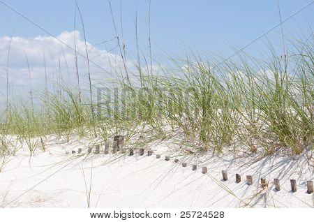 Sand dune fence buried on beach