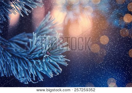 Christmas Background. Christmas Lights And Snowflakes. Sunny Bokeh. Greeting Christmas Card. Pine Br