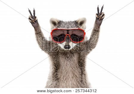 Portrait Of A Funny Raccoon In Sunglasses, Showing A Sign Peace, Isolated On White Background