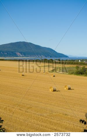 Harvest Time In The Field