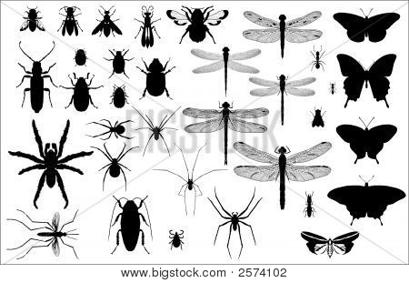 Insect_Silhouettes