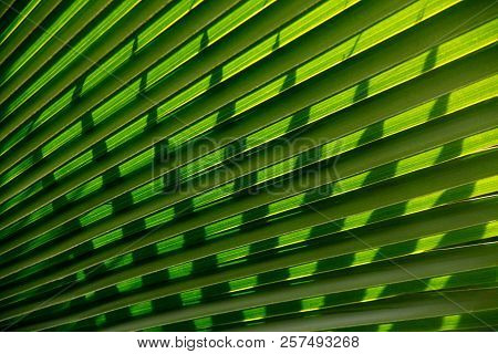 Abstract Palm Leaf Background,fresh Leaf Texture Or Leaf Background For Design.