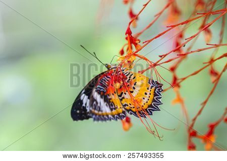 Large Tree Nymphs Butterfly And Flower,a Beautiful Butterfly On The Red Flower In Garden,paper Kite