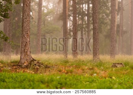 Fog In The Forrest