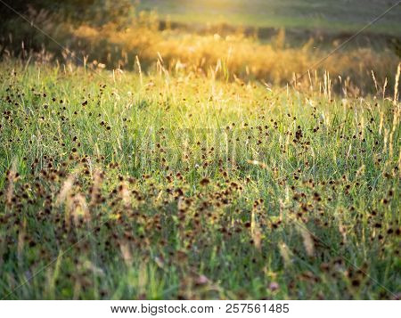Sunny Grass In The Nature.