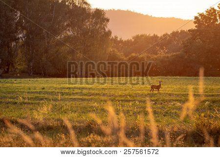 Summer Landscape By Sunset With Deer.