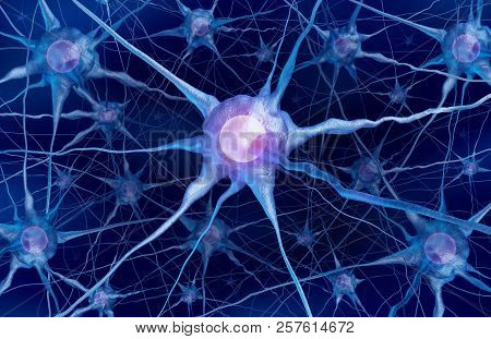 Neuron Scientific Concept And Neurology Cell Anatomy As A Mental Health Or Brain Function Symbol As