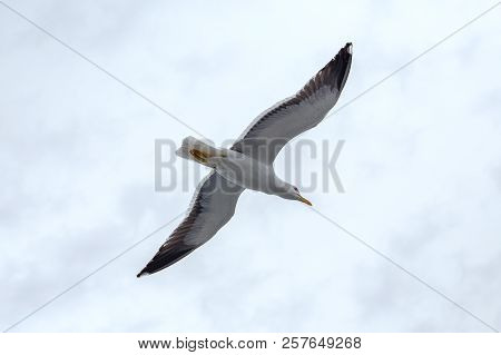 Lonely Seagull Against The Sky In Rainy Weather