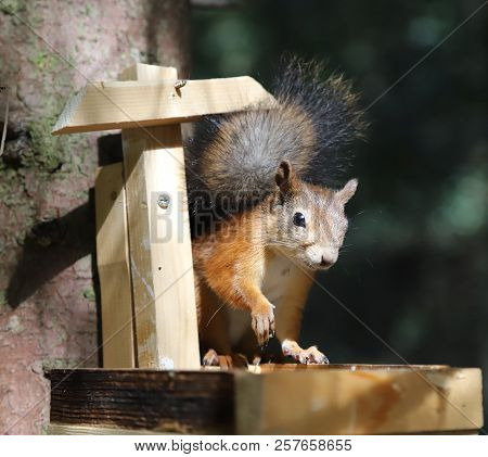 The Squirrel Eats Sunflower Seeds In The Trough. In The Summer In The Park