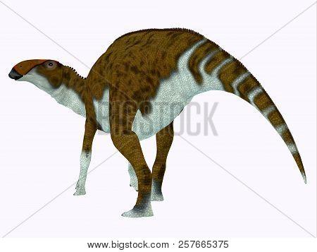 Brachylophosaurus Dinosaur Tail 3d Illustration - Brachylophosaurus Was A Herbivorous Hadrosaur Dino