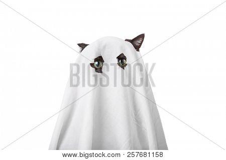 Cat in a ghost costume