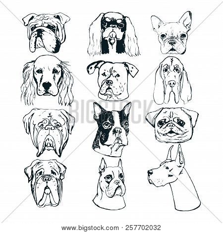 Hand Drawn Dog Portraits On White Background. Vector Dog Set. Sketches Of Purebred Dogs. Vector Elem