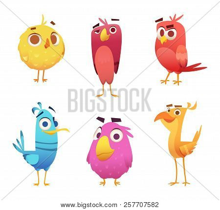 Angry Cartoon Birds. Chicken Eagles Canary Animal Faces And Feathers Vector Game Characters Of Color