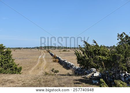 Tracks To A Remote Village In A Dry Grassland At The Swedish Island Oland