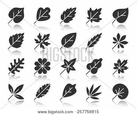 Leaf Silhouette Icons Set. Monochrome Sign Kit Of Season Foliage. Autumn Garden Pictogram Collection