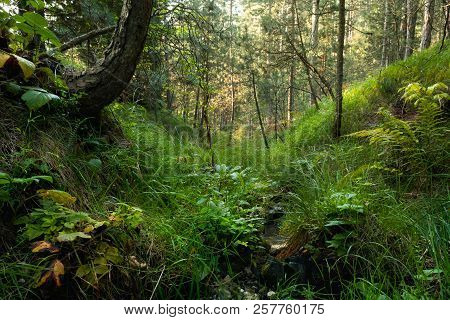 Stream In Forest Nature. Green Forest Stream. Nature. Stream. Natural Environment. Forest Nature. Br