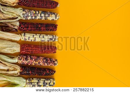 Cheerful And Colorful Dried Indian Corn On Yellow Surface As Decoration For Thanksgiving Table, Hall