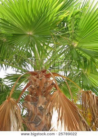 A close look at a Palm Tree on an overcast day