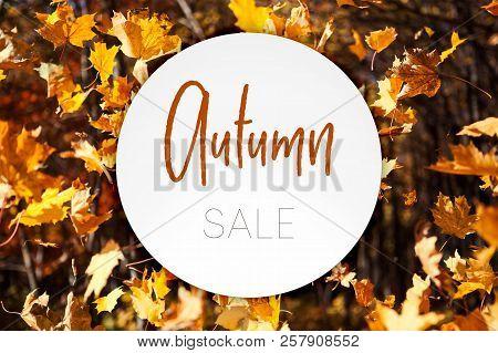 Illustration. Autumn Sale Banner Over Autumn Leaves Fall