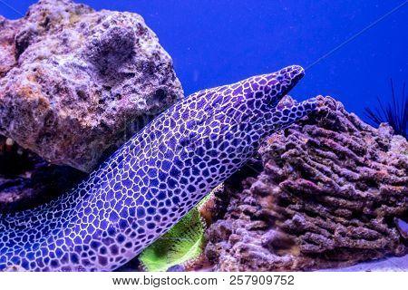 Beautiful Leopard Moray Eel Fish A Close Up