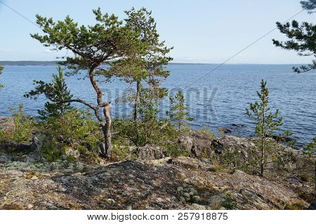 Rocky Shore Of The Lake Bay With Pine. Clear Sunny Summer Day. Far Shore, Overgrown With Forest. The