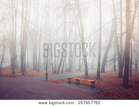 Autumn park in dense fog - lonely bench under the bare autumn trees among the fallen orange leaves. Mysterious autumn landscape scene. Autumn foggy park