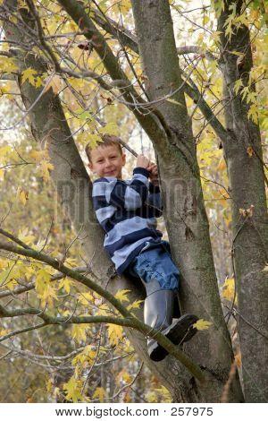 Farm Boy In Tree