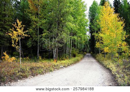 Dirt road winds through an autumn forest at Glacier National Park in Montana