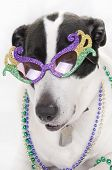 dog looking regal in jewels poster