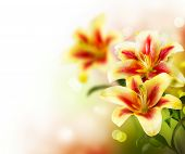 Lily Flowers border design.Spring Flowers poster